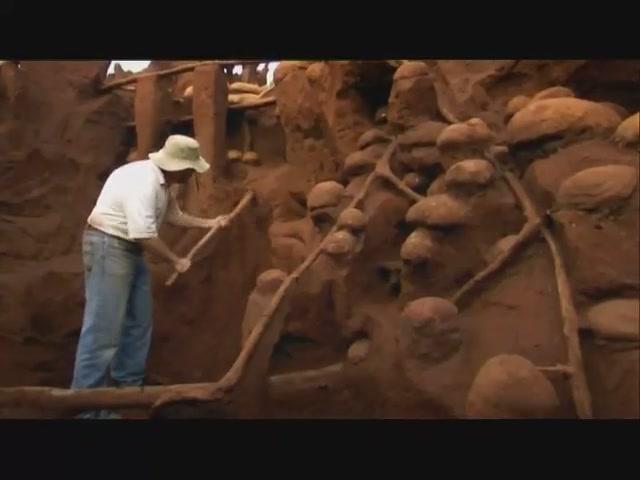Тоннели муравьёв