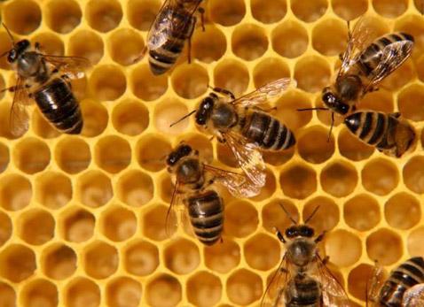 Эволюция пчёл и ос